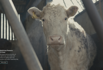 73 Cows, Mailchimp Presents Documentary