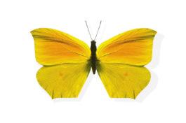 Tips om vlinders te tellen